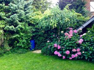 The garden of my host family :)