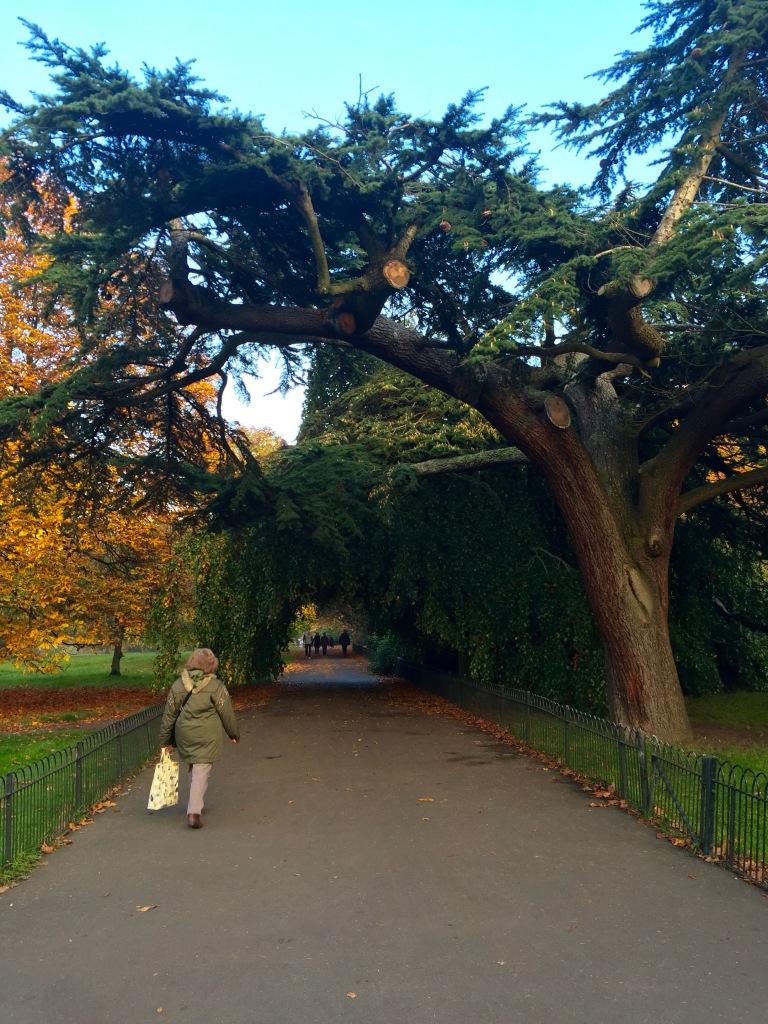 Hyde Park Meanderings
