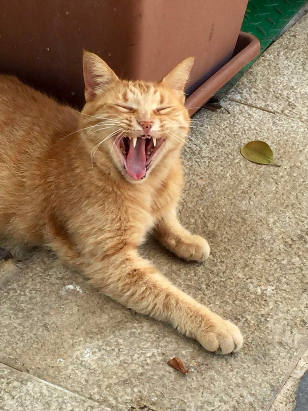 Yawning in Malta!? Who do you think you are, cat!